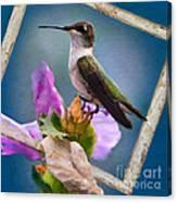 Hummingbird Picture Pretty Canvas Print
