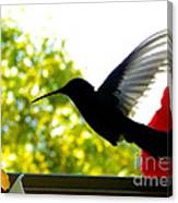 Hummingbird Series 11 Canvas Print