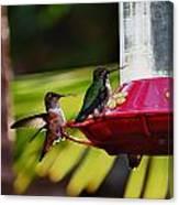 Hummingbirds At The Feeder Canvas Print