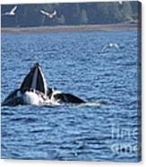 Hump Back Whale In Alaska Canvas Print