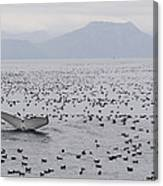 Humpback Whale Diving Amid Seabirds Canvas Print
