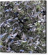 Hundreds - Tree Swallows Canvas Print