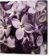 Hungarian Lilac Nr 9 Canvas Print