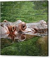 Hungry Hippo Canvas Print