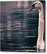 Hungry Swan Canvas Print