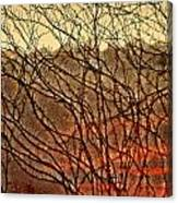 Hungry Vines Canvas Print