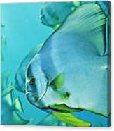 Hunting For Plankton, A School Canvas Print