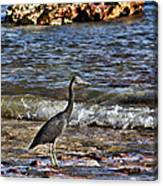 Hunting In The Shallows Canvas Print