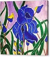 Hybrid Iris Canvas Print