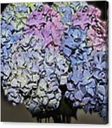 Hydrangea Boquet Canvas Print