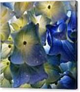 Hydrangea Close-up Canvas Print