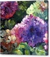 Hydrangea In Shadow Canvas Print