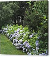 Hydrangeas In Bloom Along A Landscaped Canvas Print