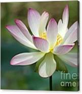 I Love Lotus Canvas Print