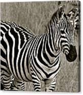 I See Stripes Canvas Print