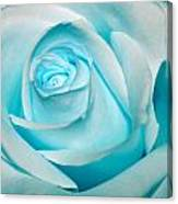 Ice Blue Rose Canvas Print
