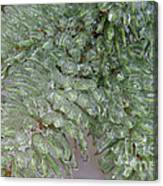 Ice-coated Norway Spruce Canvas Print