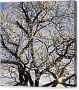Ice Covered Tree At Sunrise Canvas Print