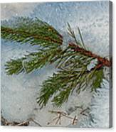 Ice Crystals And Pine Needles Canvas Print