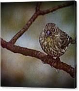 Ice Droplet Bird Canvas Print