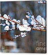 Ice On A Branch Canvas Print