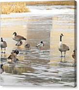 Ice Skating Geese Canvas Print