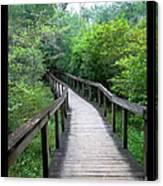 Ichetucknee Forest Pathway Canvas Print