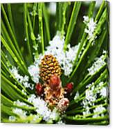 Icy Pine 1 Canvas Print