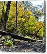 If A Tree Falls Canvas Print
