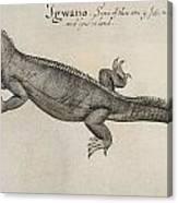 Iguana, 1585 Canvas Print