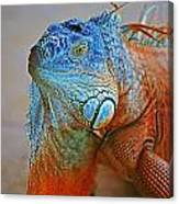 Iguana Close-up Canvas Print
