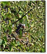 Iguana Hiding In The Bushes Canvas Print