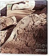 Iguana In The Sun Canvas Print