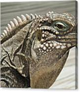 Iguana Two Canvas Print