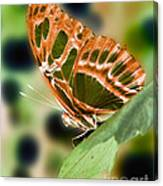 Illuminated Butterfly Canvas Print
