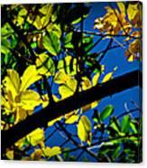 Illuminated Elm Leaves Canvas Print