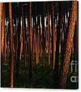 Illuminated Forest Canvas Print