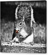 I'm A Nut Black And White Canvas Print
