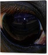 Immie's Eye Canvas Print