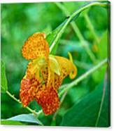 Impatiens Capensis - Orange Spotted Jewelweed Canvas Print