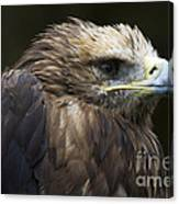 Imperial Eagle 4 Canvas Print