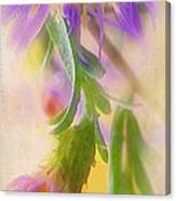 Impression Of Asters Canvas Print