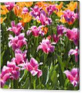 Impressionist Tulips In A Field Canvas Print