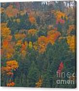 Imprssions Of Autumn Canvas Print
