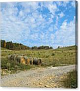 In A Country Field Canvas Print