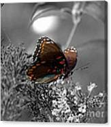 In Living Colour Canvas Print