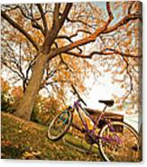 In Search Of Fall Colors Canvas Print
