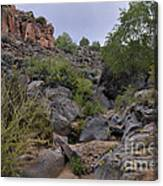 In The Arroyo   Canvas Print