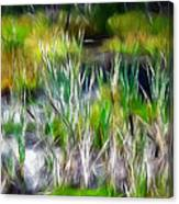 In The Bog Canvas Print