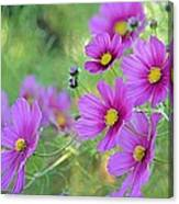 In The Company Of Pink Canvas Print